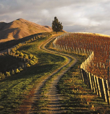 MONTECRISTO: Marlborough, New Zealand