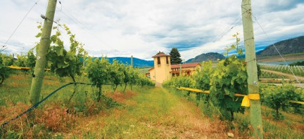 MONTECRISTO Magazine: Innovation at LaStella Winery