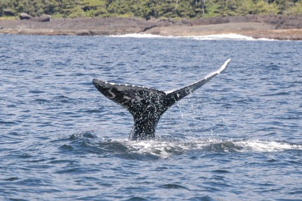 MONTECRISTO Blogs: Whale Watching