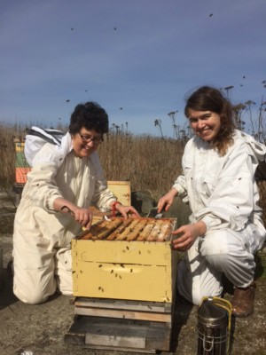 MONTE Blog: Hives for Humanity