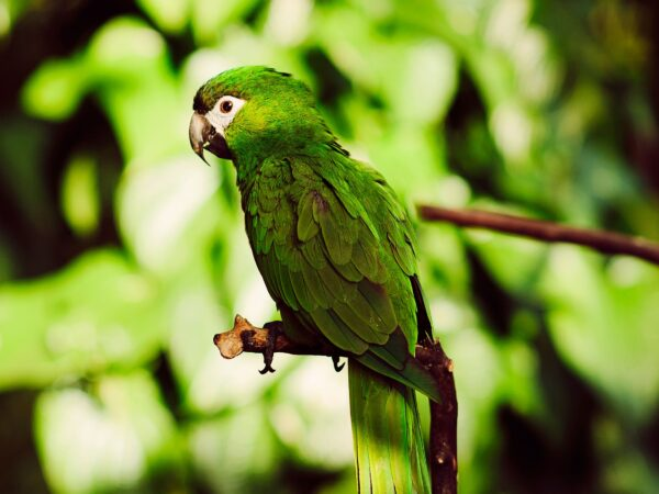 Vancouver's Botanical Garden and Aviary Celebrates 50 Years