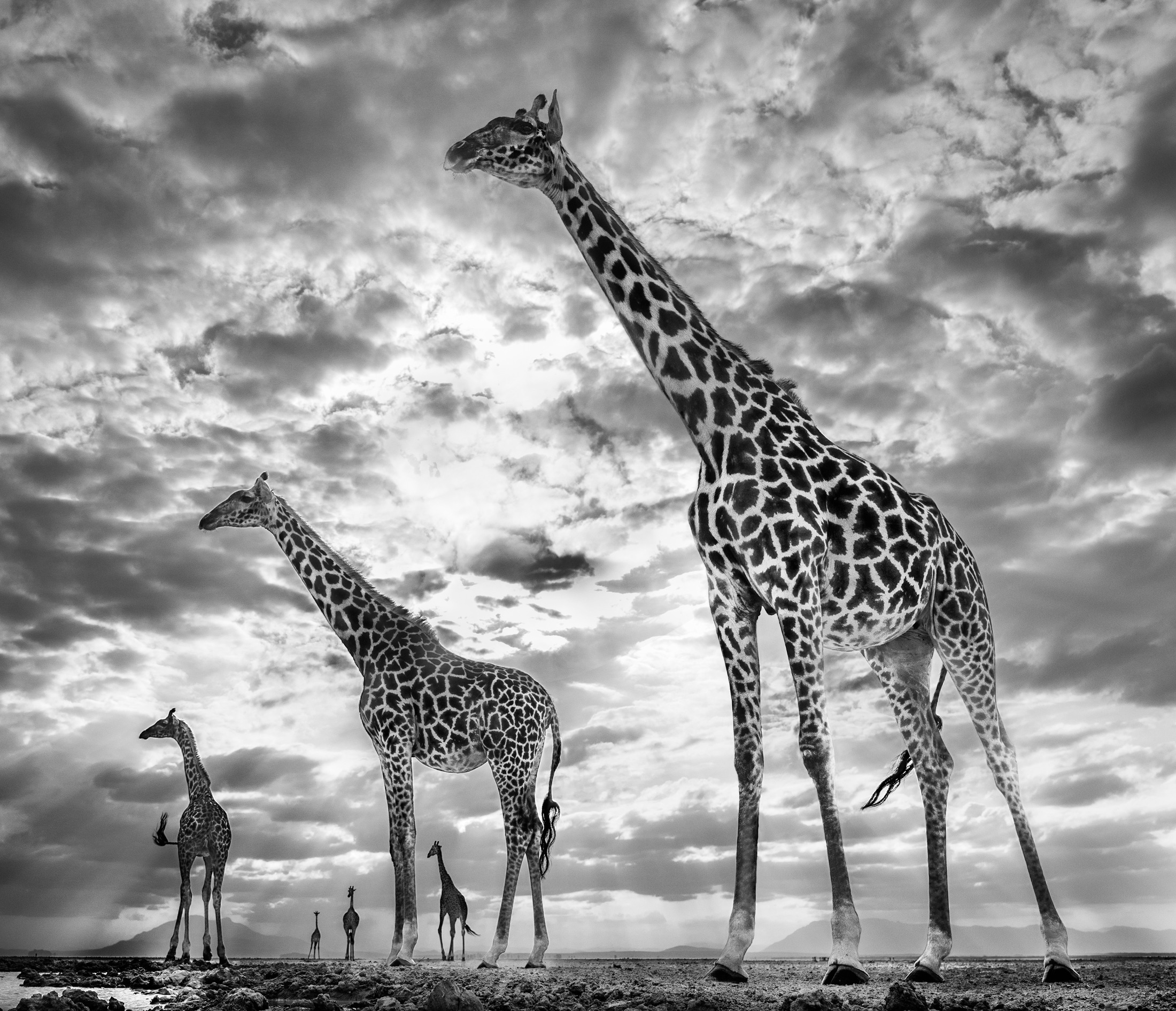 Keeping Up With the Crouches, 2019. Photography by David Yarrow. (Courtesy of Chali-Rosso Art Gallery)