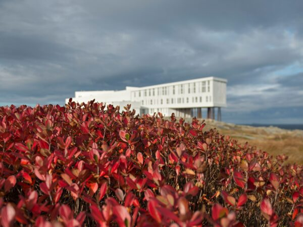 Foraging the Berry Grounds On Newfoundland's Remote Fogo Island